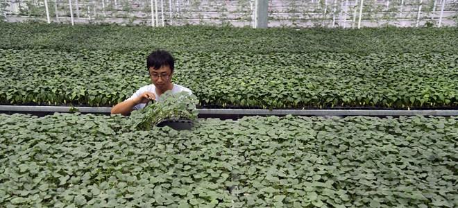 山东寒亭:项目扶贫助力群众脱贫增收