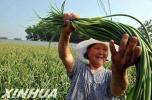 景县努力拓宽农村妇女致富门路