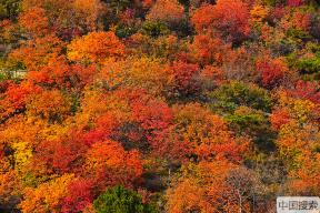 最美观赏期!北京香山公园秋意正浓 层林尽染醉游人
