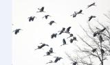 1445种!中国鸟类种数约占世界1/6