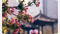 北京必逛景点 朝阳区有这么多