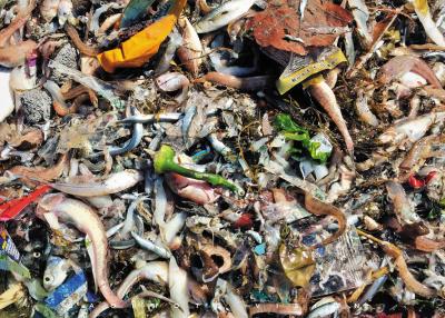 </p><p>一筐渔货,里面垃圾真不少。