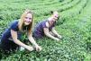 贵州烟草 打造现代山地高效农业样本
