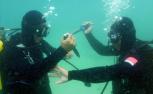 特战蛙人南海水下搏击