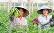破信贷难 精准扶贫 海南:普惠金融只做实事