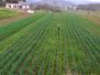 农业供给侧改革:关键在理顺政府和市场关系