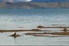 第三极大科考 探秘河湖源