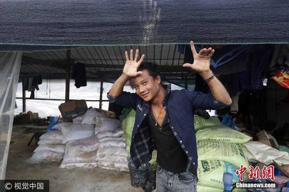 缅甸小伙云南种芋头