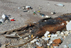青岛海滩现不明生物