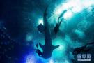 潜水8米与鲸鲨同游