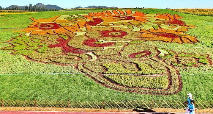 """占地40亩的""""梵高名画""""《向日葵》亮相秦皇岛"""