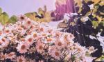 记得去看小花花
