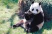 咱四个在沈阳的大熊猫老好了 就等27号和你们见面啦