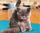 它们做的瑜伽姿势比人到位 这柔韧性你服不服?