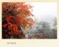 秋风吹红河南龙翔山 怎么能美得如此有诗意