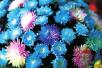 清明上河园国际菊展:菊花已全面进入盛开期