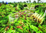 杭州一大学农学院下地种菜成必修课:种不出萝卜番薯毕不了业