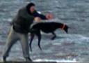 男子反复将狗扔海里