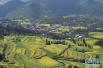 专家聚焦乡村振兴战略:惠农强农如何实现?
