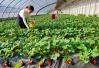 打通农产品上行渠道 重庆将成立电商扶贫联盟