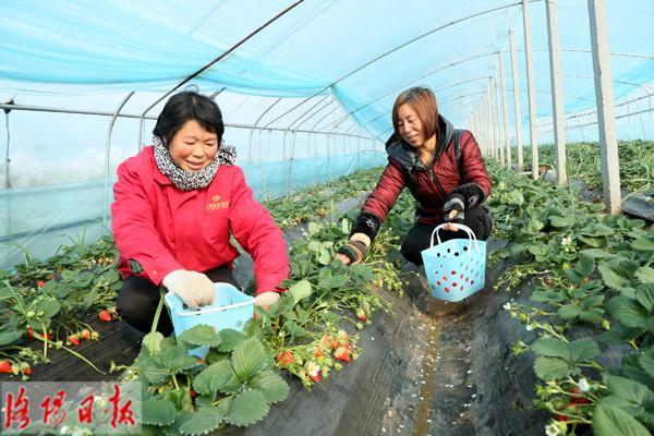幸运飞艇信誉群:汝阳县小店镇:发展高效农业 助农脱贫致富