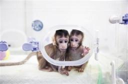 保护世界濒危物种贵州黑叶猴数量达850多只