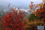 你所不知道的香山:曾称杏花山 真实海拔575米