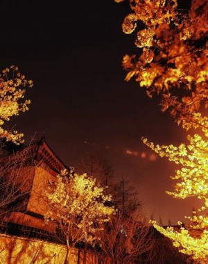 夜幕下南京鸡鸣寺:夜未央樱花如梦
