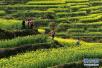 偷排废水的老板建起2000多亩生态农场:环保救赎