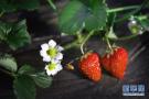 4月朋友圈谣言盘点:草莓最脏、咖啡致癌 这些你也信?