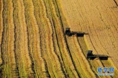 人民日报:粮食库存多会花财政的钱 这个账划算