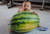 """蔬菜瓜果不好吃了?瓜果为何吃不出""""小时候的味道""""?"""