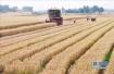 """济南小麦调整最低收购价 给农户吃了颗""""定心丸"""""""