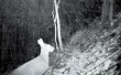 真的吗?伏牛山拍摄到国家一级保护动物林麝