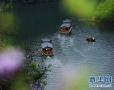 酷暑已来到 河南这些景区适合盛夏时节出游