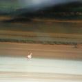 河南孟津:珍稀火烈鳥野外出鏡