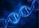 """""""基因编辑""""不了了之?专家:调查复杂"""