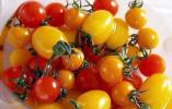 圣女果彩椒紫薯都是转基因食品?别再信了!