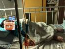 南京2岁男童入住自如患白血病离世 自如员工病房外言语轻松称赔得起7位数