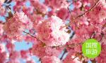 敬孔子、登泰山、赏牡丹…走进北京世园会山东园