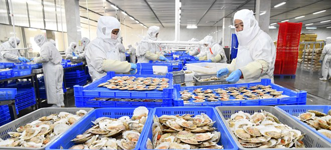 山东乳山:海产品生产出口忙
