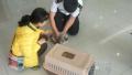 山东首签非犬猫类动物卫生证书 另类宠物可出国