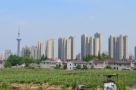 建鄴區與江蘇二師合作 將在江心洲建中小學校