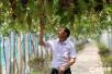 舟山:工人冒高温采摘葡萄
