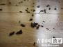 不明昆虫突然增多闯入长春高层办公楼 专家:没毒