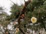 寒冬里的春意 古林公园腊梅花开暗香浮动