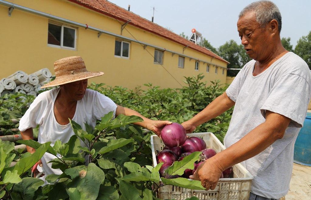 滨州:种养结合 以园养院