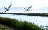 """河北两湿地公园晋升""""国家级"""" 又有三处进试点"""