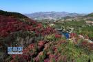 农房变客房、劳作变体验……济南南山旅游今后这样干