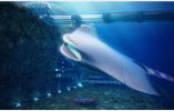 50年后的潜艇长啥样?外形设计可能越来越像海底生物